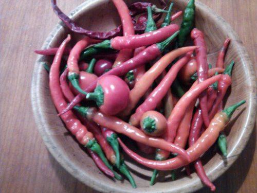 peperoncini freschi