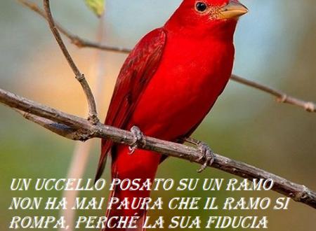 Un uccello posato su un ramo
