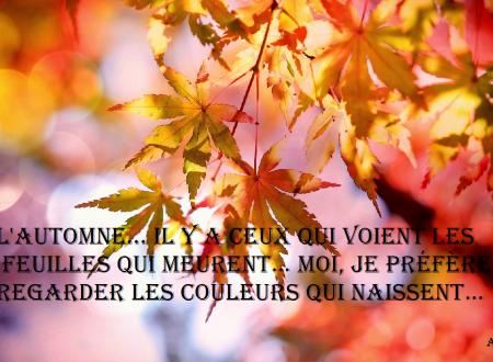 L'automne… Ily a ceux qui voientlesfeuilles