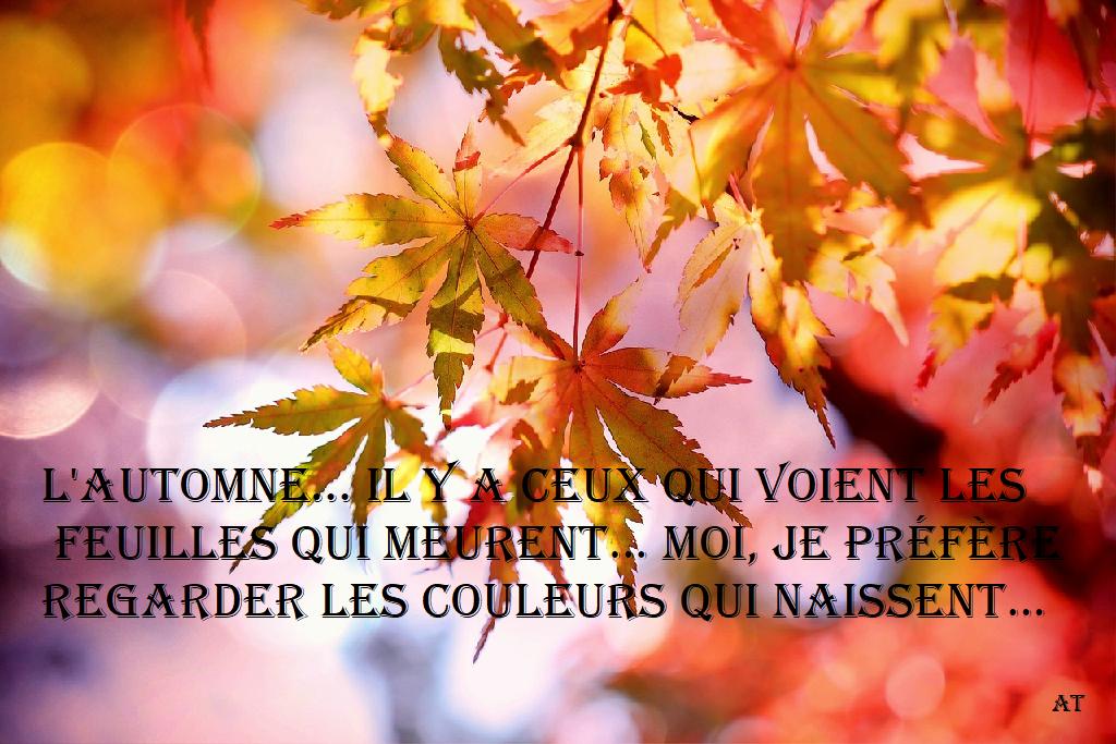 L'automne... Ily a ceux qui voientlesfeuilles
